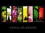 Colors of nature by Yueshi