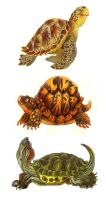 Turtle Stack by Rowkey