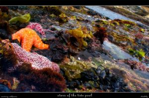 Stars of the Tide Pool by cluskillz