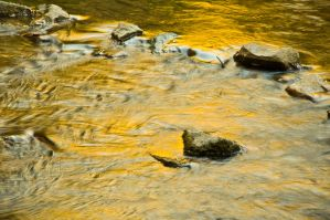 A River of Gold by Corvidae65