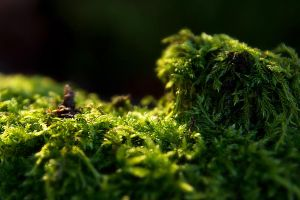 moss by Riot23