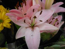 Grocery Store Flowers I  001 by amethystmstock