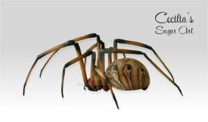 Brown Widow Spider - Made of Sugar by Kabanero