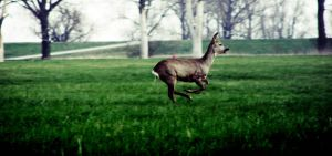 Running with Deers by Photono