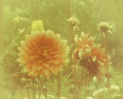 Flower by Amalus