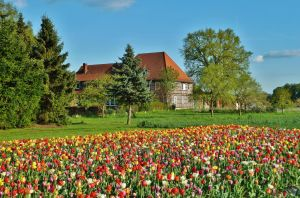 Spring in Lower Saxony by Dieffi
