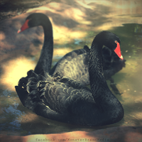 Day 222 - Black Swan by MonsterBrand