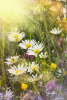Summer dream :) by Lucie-Lilly