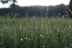 Morning grass by Beccis1995
