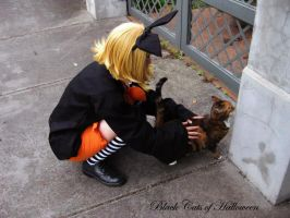Vocaloid - Cat to Cat by cindry-sama