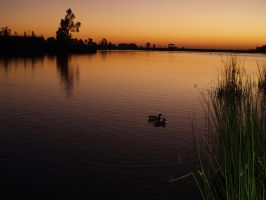 Two Birds Mingling in the Lake at Sunset by CatherineAllison