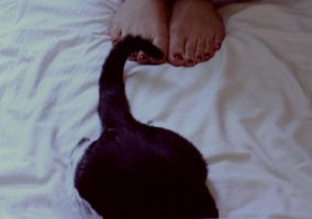 chaton. by moumine