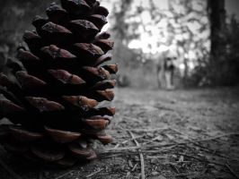 pine cone by morgangirlygril