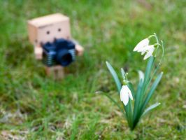 Capturing the Snowdrops by Bootcoot