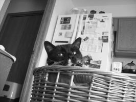 Laundry Basket Cat by FullmetalJunkie