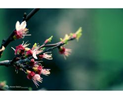 Spring 3 by Rukkancs