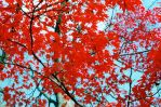 Nature Photo 07 by Butch007