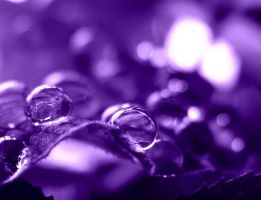 purple. by Aparazita-R