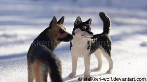 German Shepherd and Siberian Husky II by Stalkkeri-wolf