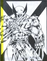 wolverine by Capocyan-Arvin