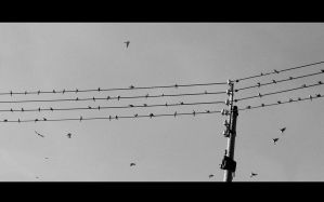 birds. by addnill