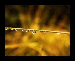 Autumn drops by fotojenny