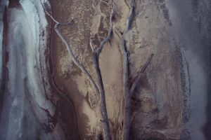 tree on riverbed by FigoTheCat
