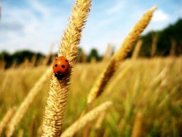 Ladybird in the wind by akrPhotography