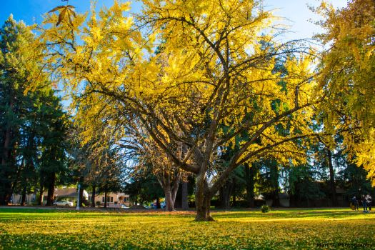 Yellow Trees by AperturistOne