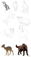 Animal sketches 2 by Wolf-Goddess13
