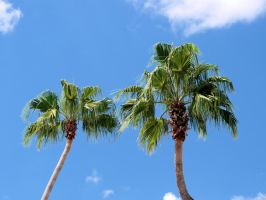 Waving palm trees by jelbo