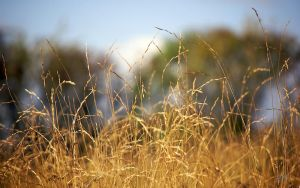 Grasses Wallpaper by andy1349
