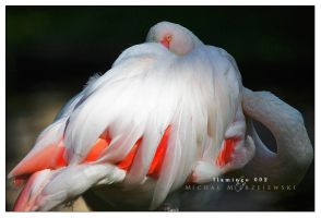 flamingo 002 by werol
