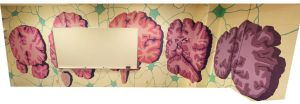 Brain X-sections and neural networks mural by Dannayy