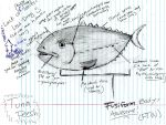 Pelagic Fish Diagram by orcafinatic