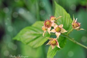 Wild Berries by ShelbyMelissa