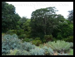 Prickly Forest by Mireth