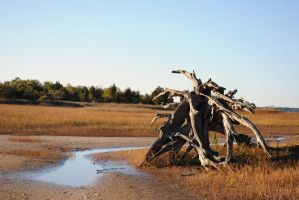Stranded Driftwood by Bawwomick