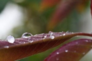 More waterdrops by luka567