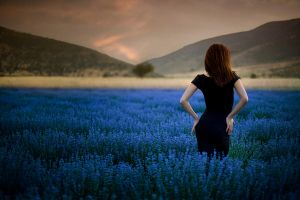 lavender s by apostolos-t