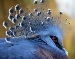 Crown of Feathers by Souzay