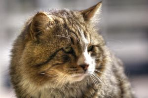 grizzly cat by enkin
