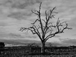 dead tree, root, biosphere, nature, plants by basquiat79