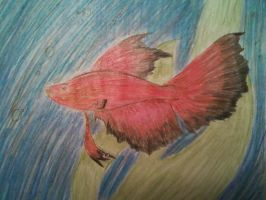Beta Fish by SilentTalent