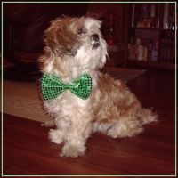 St.Patrick's Day Ozzy by Kittensoft