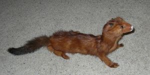 Chester the Mink by modastrid