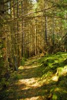 Woody path by kaelby