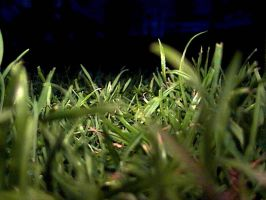 Grass stock by foley-resources