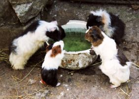 The Fountain of Cuteness by borda