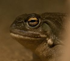 Frogs Eye by BonsEYE